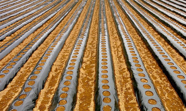 農作物の株元を覆うために使うマルチフィルムのイメージ画像