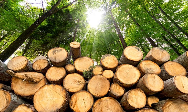 木材生産のイメージ写真